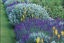 Zahrada - záhony