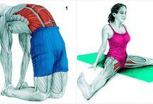 Muskler/stræk