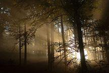 Inspiring nature  / La Nature, une source d'inspiration pour l'Homme