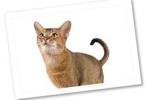 Meet the Breeds: Cats