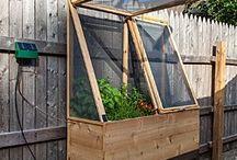 Gardening / Herb garden