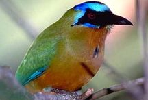Nature & Wildlife / by Las Terrazas Resort