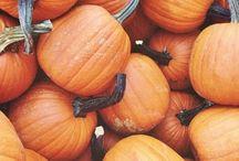 pumpkin everywhere !