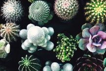 Любимые кактусы