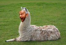 Tom Hanks as animals
