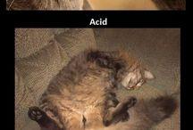 Crackhead cats