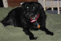 Skippy: Rainbow Bridge, 12/18/15 / Pictures of our beloved dog, Skippy, whom we adopted from Mostly Mutts in 2003. Skip had a nice long life of about 14 years before we had to put him down because of arthritis and other health issues. We miss him.