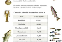 Aquaculture / by AFS Fisheries