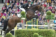 HH Copin Van De Broy / BWP stallion owned by Double H Farm. Available for breeding in 2015 through Hyperion Stud.