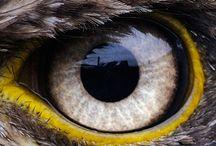 Eye - F