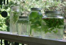 Herbal Life / by Blair Ramon