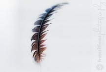 Transitions Photography - Random