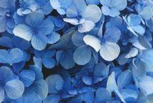 Flowers | Blue / Flowers | Blue