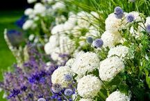 Purples, blues and white garden