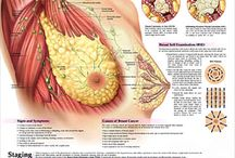 About Breast Cancer / Health information about this disease and what should we do in order to prevent it