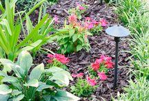 Gardening Tips + Inspiration