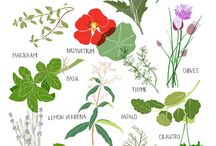 herbs / by Betsy Edwards