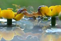 slakken / wondere wereld van slakken