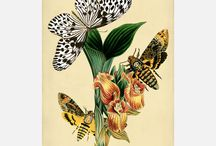 Vintage butterflies and moths