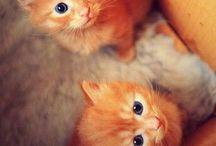 Kittins only