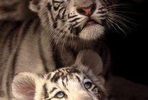 Animals/cute