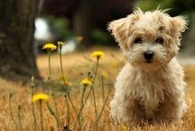 cute as