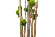 композиции с дровами
