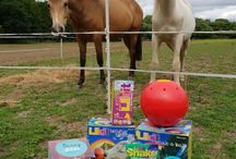 Equestrian Product Reviews via Everything Horse