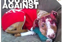 against dog fighting