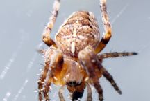 CPM's Photos of Spiders & Webs