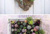 Живые картины из растений-сиккулентов