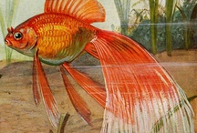 Goldfish Art / by Junell Toney