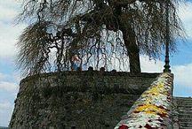 Eleggi l'Albero dell'anno 2016. I dieci alberi che concorrono per il Premio della Critica