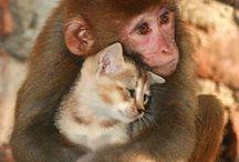 Photos insolites animaux
