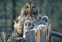 Owldorkable
