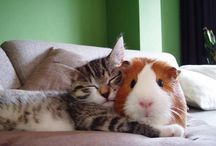 Interspecies Friends / What's better than different types of animals cuddling and playing together? Nothing.