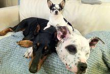 Dogs / by Lori Perkins