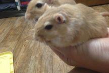 my gerbils / 3 gerbils