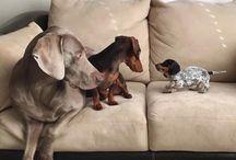 Cães & Cia