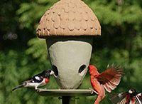 Bird Baths and Bird Feeders / by Mammy Simkins