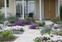 drought resistant landscapes