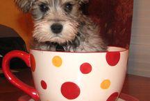 Puppy Love / by Sydney Feipel