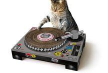 cats pets gatos chat / Gatos cats pets mascotas toys