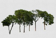 포토샵 나무