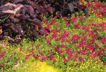 Layered Landscapes / An attractive landscape design focuses on tall plants in back, medium height plants in the middle and low-lying varieties in the front of the garden bed. Here are ideas of plant combinations in the landscape that can easily give you the desired effect of a professionally planted flower garden.