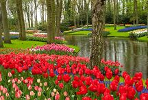 Keukenhof - tulips