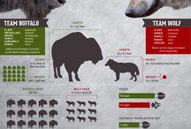 Hoofstock Herds - Bison & Deer