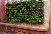Small space garden ideas / Find out how you do not need a large yard to have a garden.