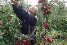 æbler / Board til pædagogisk diplomuddannelse i naturfagenes didaktik, modul 2