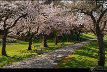 spring / by Sarah Spalinger